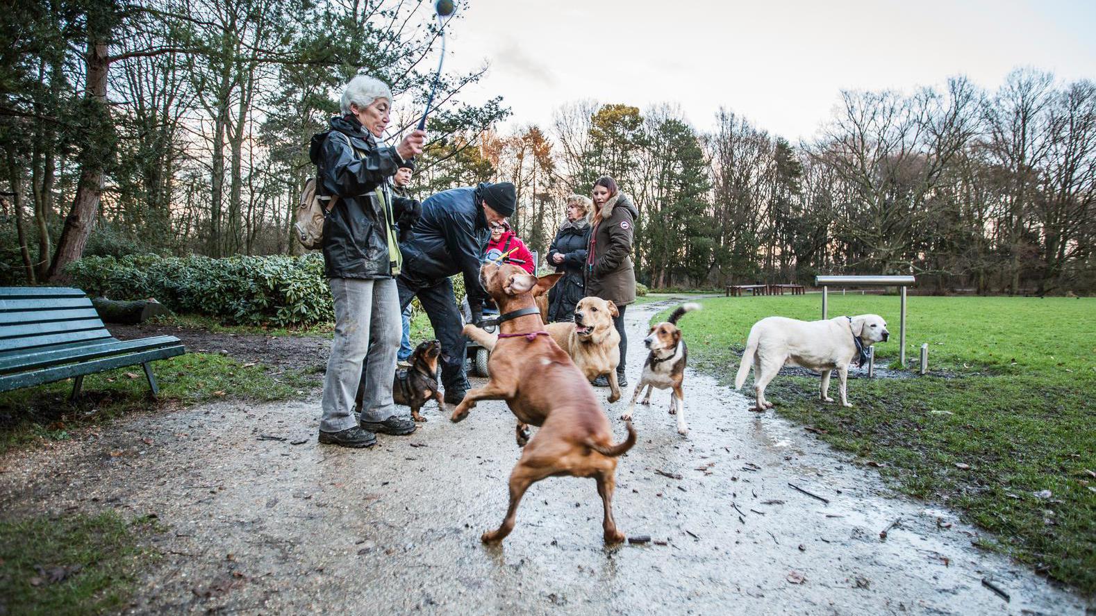 Bijtincidenten met honden: 'Met regels los je dit niet op'