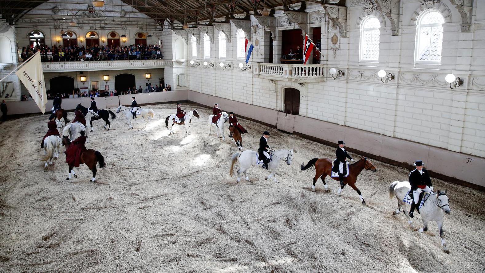 Amsterdam dringt aan op wetgeving paardenwelzijn